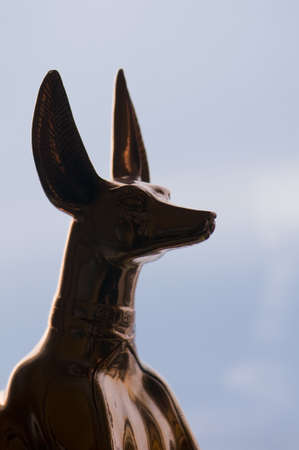 Anubis photo