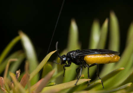 Wasp Stock Photo - 8969177