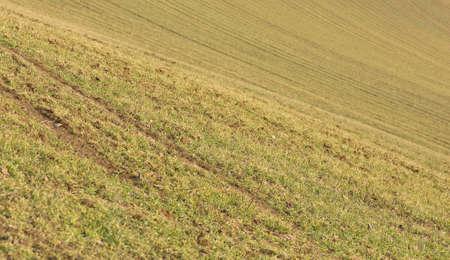 Morning Grass Stock Photo - 9023126