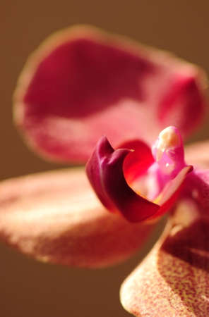 orchidea photo
