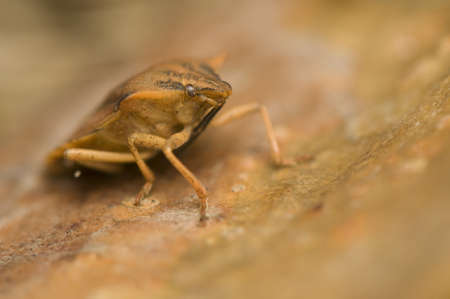 Bedbug Stock Photo - 9257899