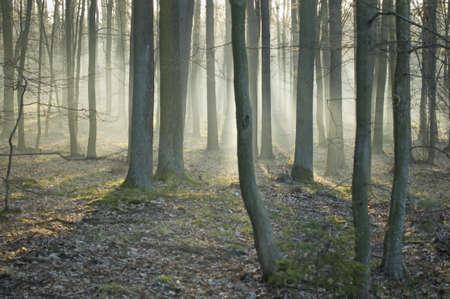 Oak forest morning Stock Photo - 9338853
