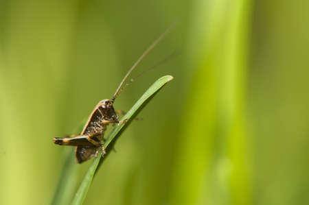 Pholidoptera Stock Photo - 9471728