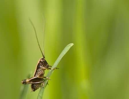 Pholidoptera Stock Photo - 9471556