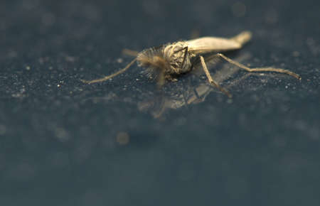 Mosquito photo