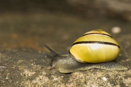 Snail Stock Photo - 9572940