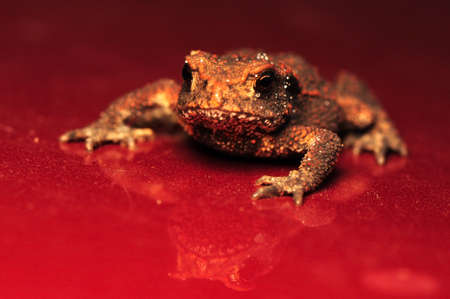 Toad Stock Photo - 10334513