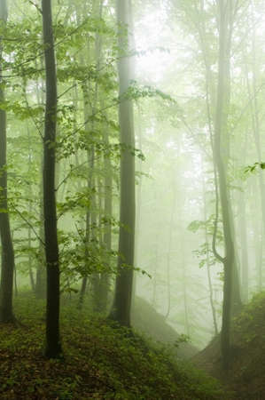 Beech forest in the summer after the storm Stock Photo
