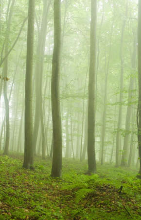 Beech forest in the summer after the storm photo