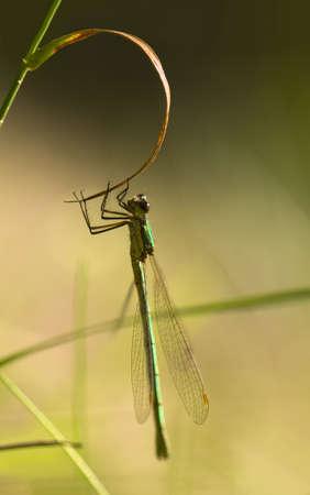 Dragonfly Stock Photo - 10534323