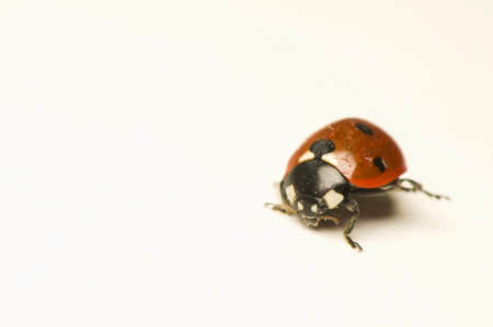 Ladybird Stock Photo - 10803379
