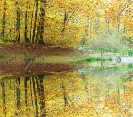 Autumn forest Stock Photo - 11097716