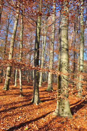 Autumn forest photo