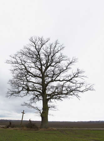 Tree, cross, road - Road through life Stock Photo - 11494450
