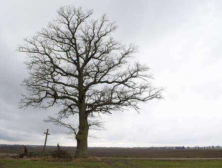 Tree, cross, road - Road through life Stock Photo - 11494419