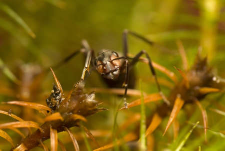 Ant - Formica rufa Stock Photo - 11755748