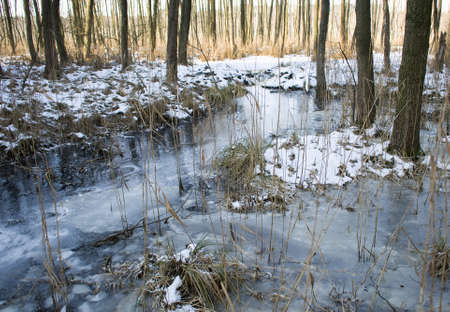 ice dam: Alder forest and beaver dam Stock Photo