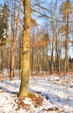 Winter mixed forest