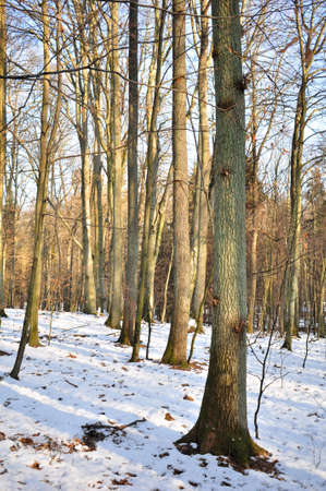 Winter mixed forest Stock Photo - 12190311
