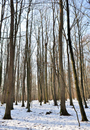 Winter forest Stock Photo - 12190263