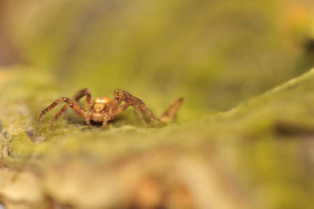 Small spider photo