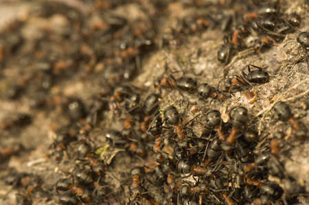 Anthill Stock Photo - 12699438