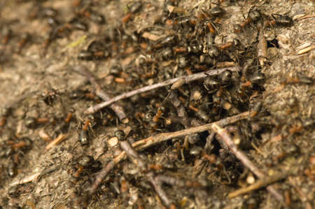 Anthill Stock Photo - 12699446