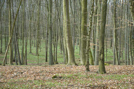Spring forest Stock Photo - 13328653