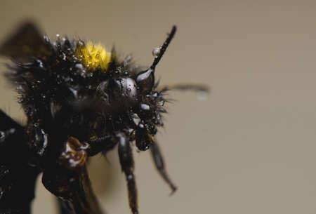 Bumblebee Stock Photo - 13328611