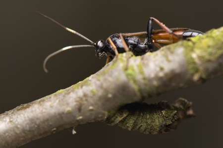 Ichneumonidae Stock Photo - 13319653