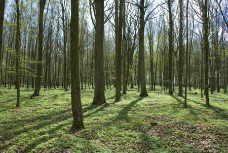Spring forest photo