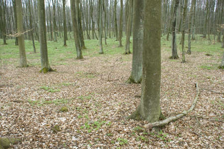 Spring forest Stock Photo - 13406930