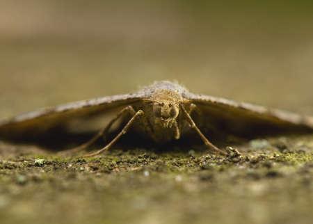 Moth Stock Photo - 13628948
