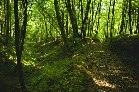 Spring forest Stock Photo - 13749906