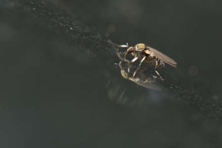 culicidae: Culicidae Stock Photo