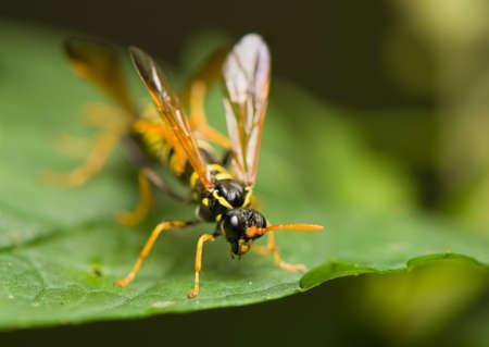 Wasp Stock Photo - 14107206