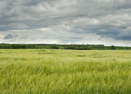 ble: Field - landscape Stock Photo