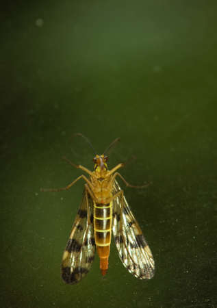 insect photo