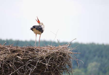 Stork Stock Photo - 14769898