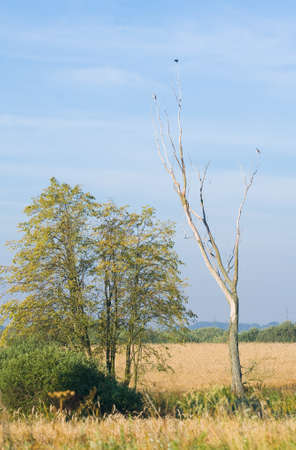 clump: Field and clump of trees Stock Photo