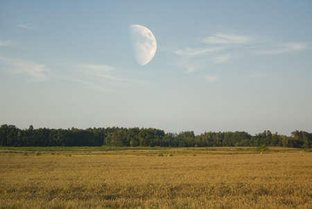 Field and moon photo