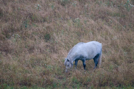 Horse Stock Photo - 15215233