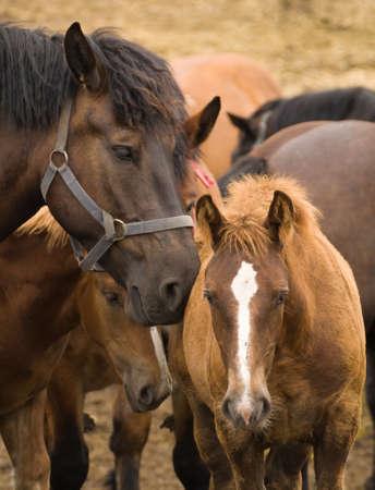 Horse Stok Fotoğraf