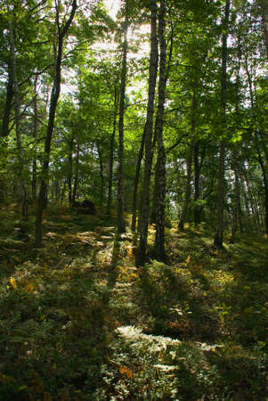 Forest Stock Photo - 15329853