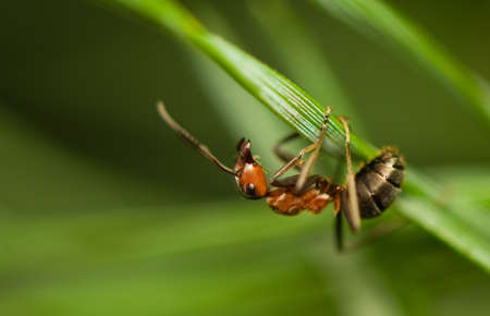 Ant - formica Stock Photo - 15639257