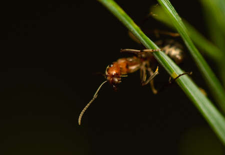 Ant - formica Stock Photo - 15639211