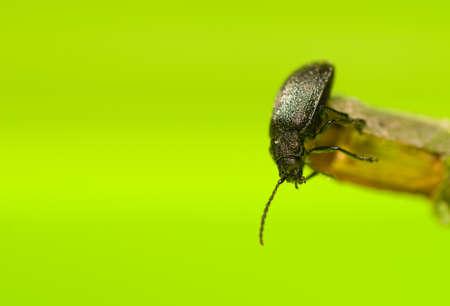 Beetle Stock Photo - 15758005
