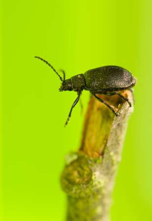 Beetle Stock Photo - 15758004