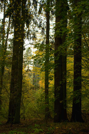 twing: Autumn forest Stock Photo