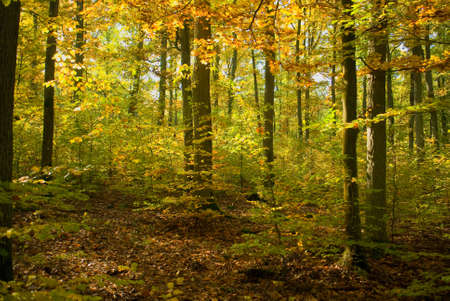 Autumn forest Stock Photo - 15982240